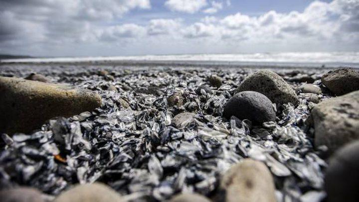 العشرات من قناديل البحر تغزو شواطئ نيوزلندا