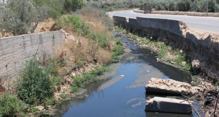 """مجاري مستوطنة """"اريئيل"""" تلوث حقول الزيتون في سلفيت"""