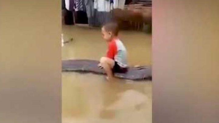 شاهد.. طفل بعمر ثلاث سنوات يمتطي ثعباناً طوله ستة أمتار