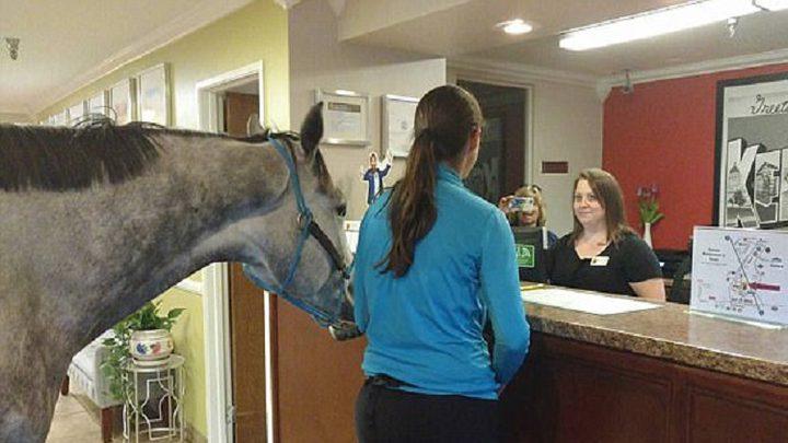 سيدة غريبة تصطحب حصان إلى غرفة فندق
