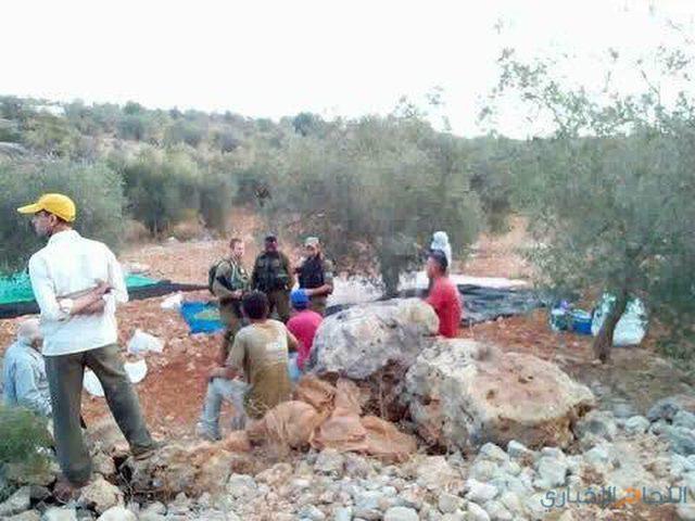 يوم عمل تطوعي لمساعدة المزارعين في قطف ثمار الزيتون