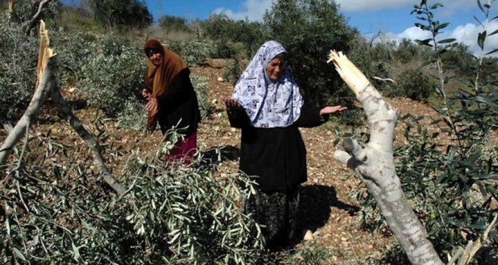 """""""حل ثلاثي"""" لمواجهة انتهاكات الاحتلال للأرض الفلسطينية"""