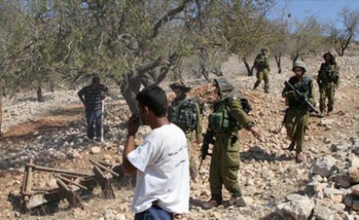 الاحتلال ينكل بقاطفي الزيتون شرق قلقيلية