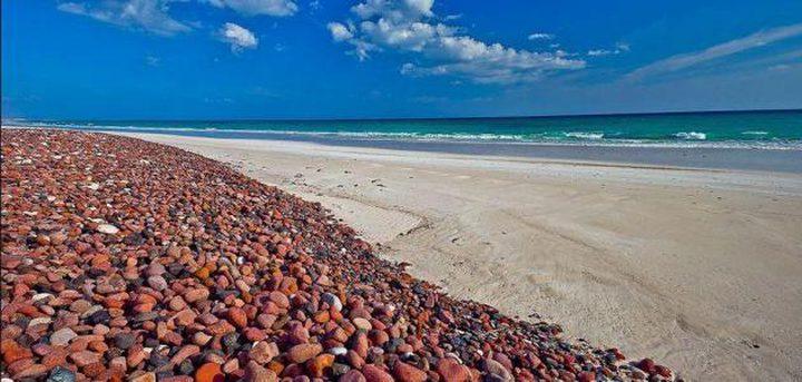 جزيرة سوقطرة اليمنية ... متحف التنوع البيئي