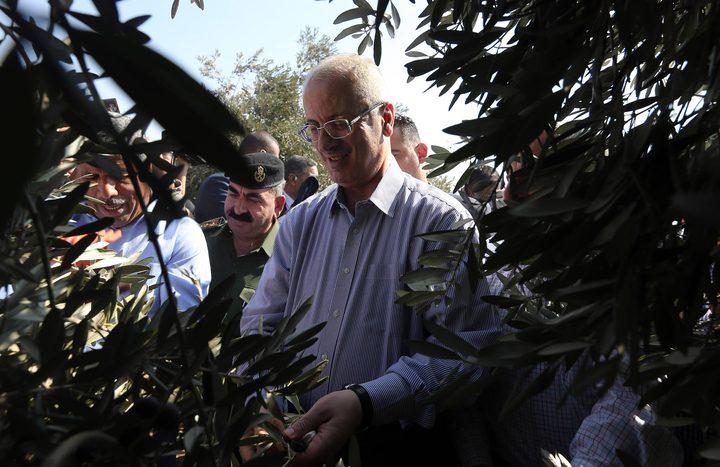رئيس الوزراء يشارك المزارعين قطاف الزيتون (صور)