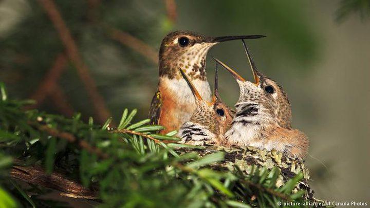 حتى الطيور تبحث عن المنفعة المتبادلة!