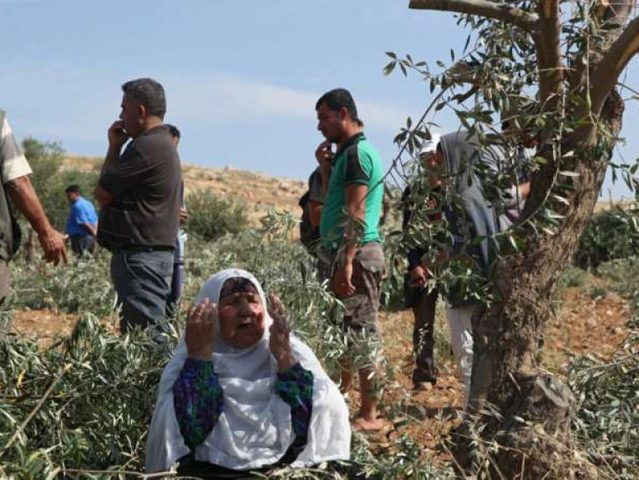 قوات الاحتلال ومستوطنون يعتدون على نشطاء دوليين