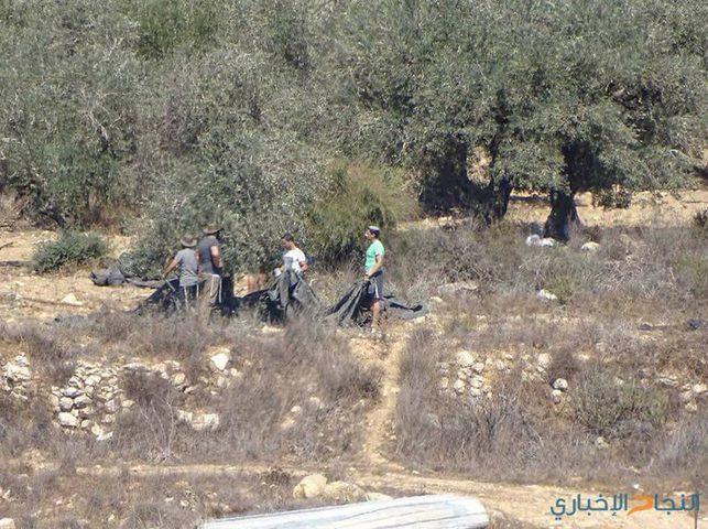 مستوطنون يسرقون ثمار الزيتون من أراضي عورتا