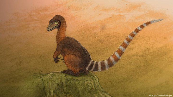 ديناصور مغطى بالريش وبحجم حيوان الراكون يحير العلماء