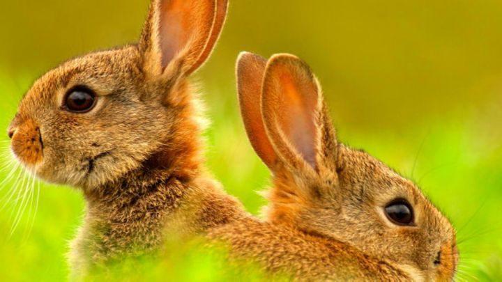 حكومة أوروبية: تناسلوا مثل الأرانب
