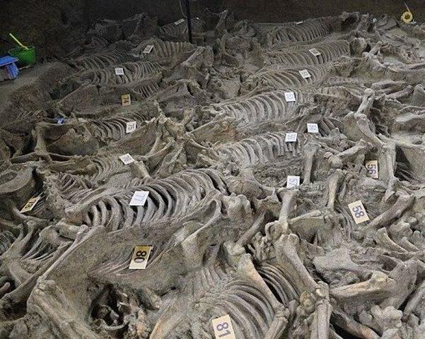 مقبرة أثرية سكانها ليسوا بشراً..!(صور)
