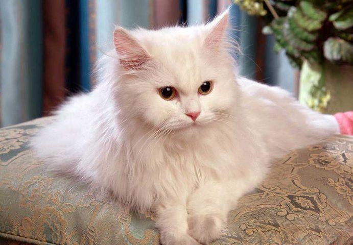 """بريطانيا تبحث عن """"سفّاح القطط"""" والسبب غريب!"""