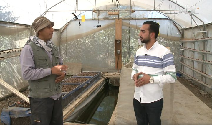 الزراعة المائية في مدينة طولكرم (فيديو)