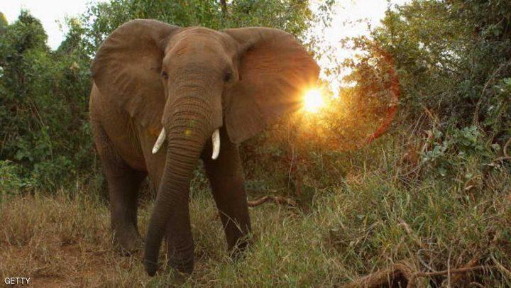 ترامب يتخذ قرارا مهما من أجل الفيلة