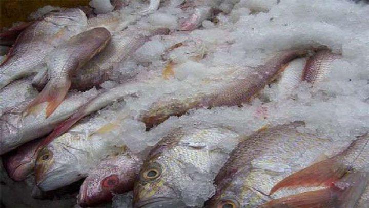 هل تجميد الأسماك يفقدها فوائدها؟