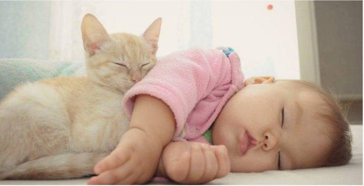 حيوانات أليفة يتمنى الأطفال أن يجدوها في منزلهم (شاهد)
