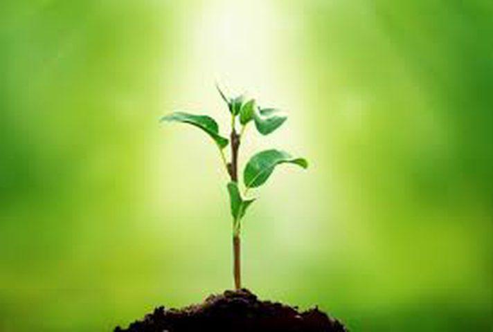استخدام النباتات في تقنية الجاسوسية