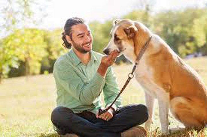لهذا السبب تسعى الكلاب للحصول على صداقة البشر