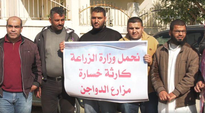 هبوط أسعار الدواجن في غزة (فيديو)