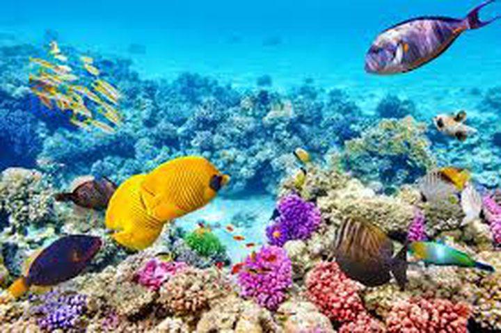 علماء يحاولون احياء الحاجز المرجاني العظيم