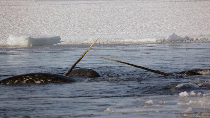 ما هي خطة هروب الحيتان عند الخوف؟