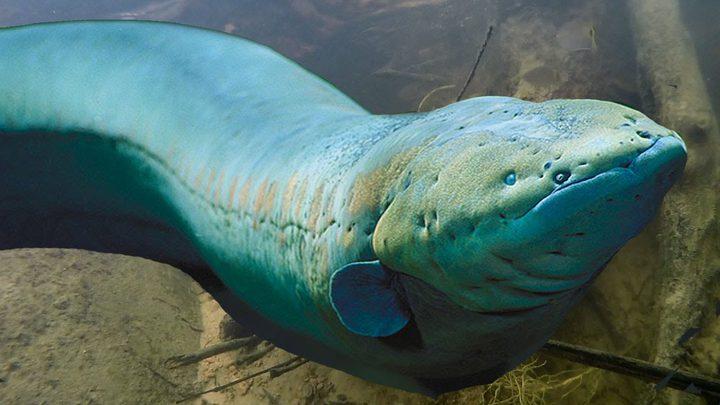 ثعبان البحر يلهم العلماء لإنتاج الطاقة بطريقة فريدة