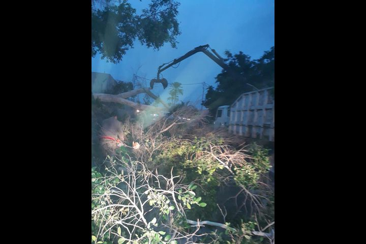 سقوط شجرة.. يحدث خراباً (صور)