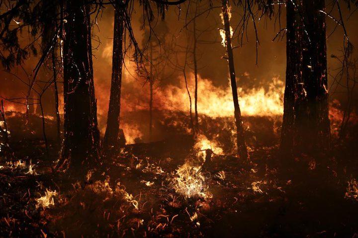 المناخ يوقف نمو الغابات بعد الحرائق