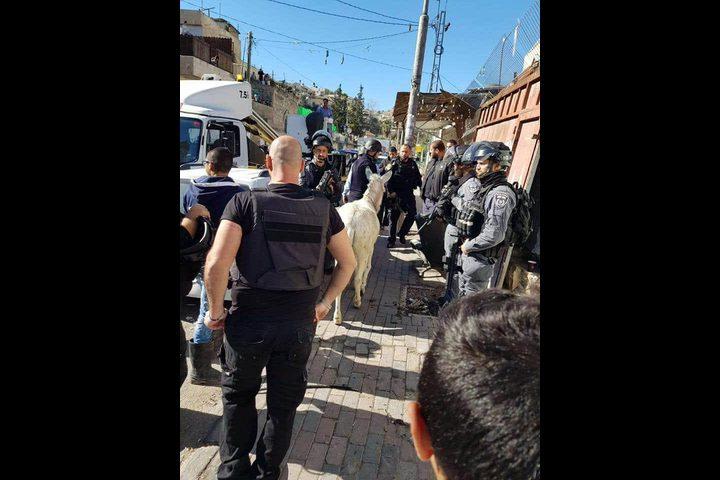 الاحتلال يعتقل حماراً
