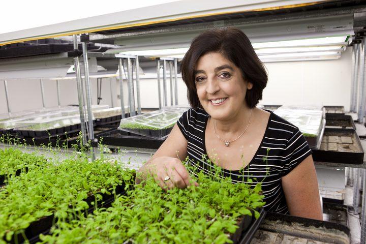 عالمة نباتات تفوز بجائزة 3 ملايين دولار عن أبحاث تغير المناخ