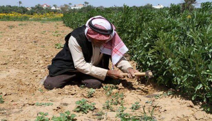 صرف تعويضات لـ400 مزارع متضرر خلال السنوات السابقة