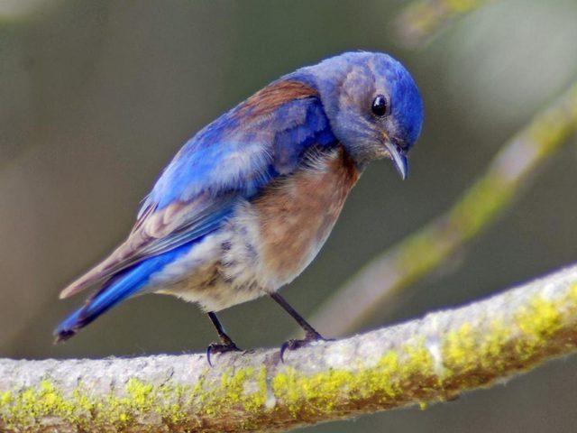 الضوضاء تسبب الإكتئاب المزمن للطيور !