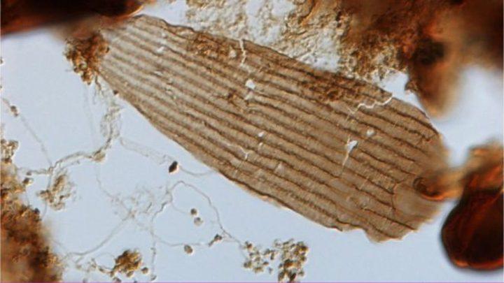 شاهد أقدم فراشة عرفها التاريخ