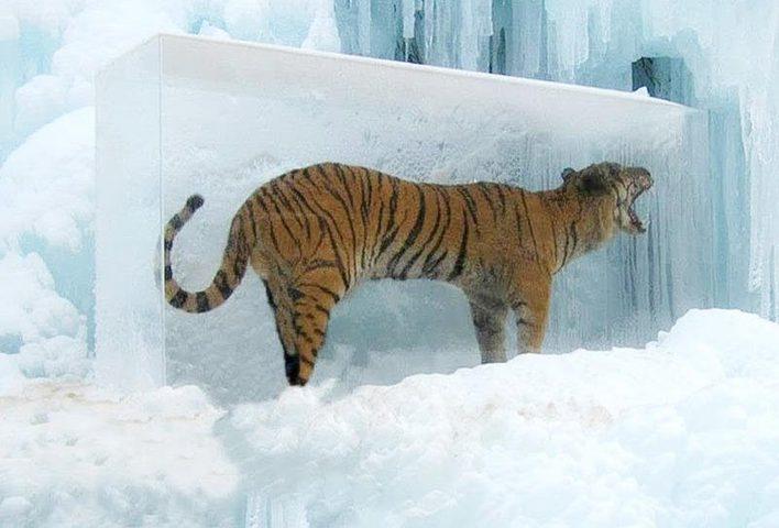 صور.. أغرب المناظر في فصل الشتاء