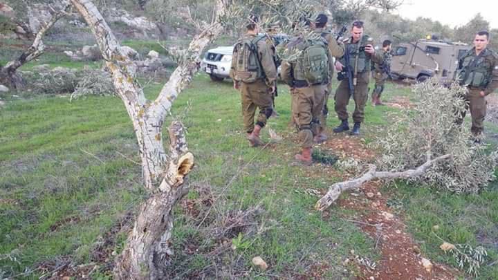 مستوطنون يعتدون على المواطنين ويحطمون 110 شجرة زيتون جنوب نابلس (فيديو)