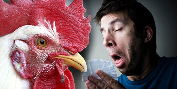 إنفلونزا الطيور يضرب مجدداً..