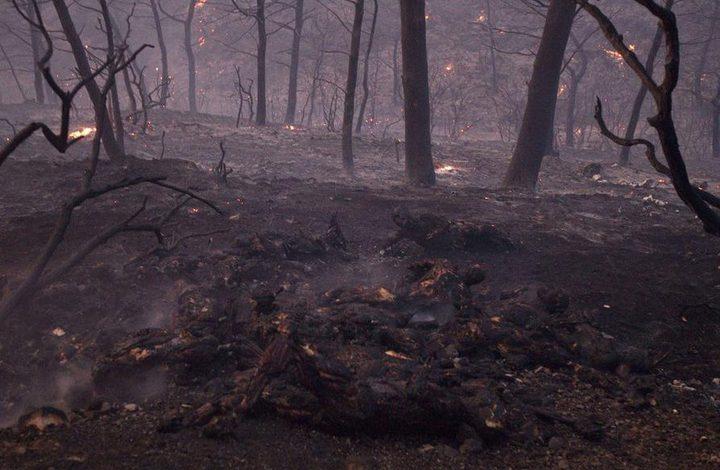 ما الذي يدفع الصقور الأسترالية لإحراق الغابات؟
