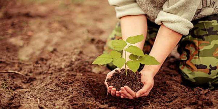 بمناسبة يوم الشجرة.. زراعة طولكرم تنظم نشاطاً مركزياً