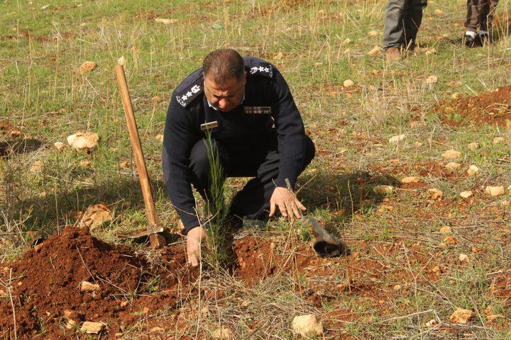 طوباس: زراعة أشجار ضمن فعاليات يوم الشجرة