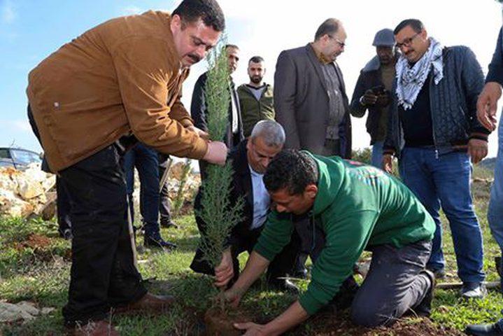 زراعة أشجار حرجية في قرية عزبة الطبيب بيوم الشجرة