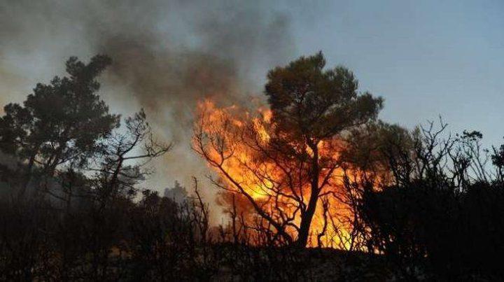 إنقاذ 200 شخص في حرائق غابات سيدني