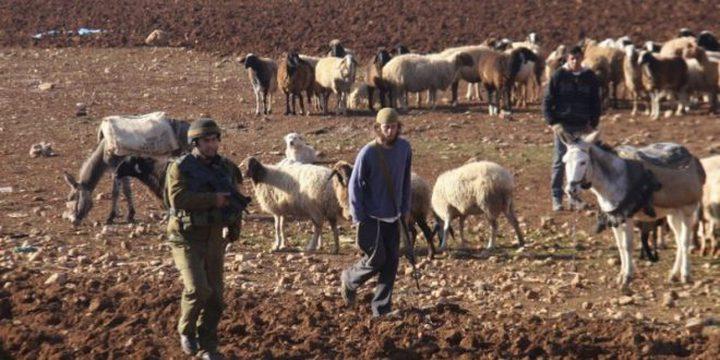 بقوة السلاح.. مستوطن يطرد رعاة الأغوار من منطقة الفارسية