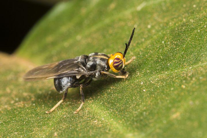 اكتشاف صبغة آمنة يمكن استخدامها في علاج الملاريا