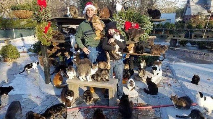 رجل حوّل منزله إلى مأوى لـ300 قطة
