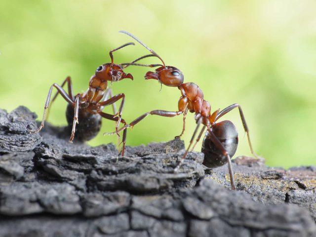 هل يصبح النمل مصدراً للأدوية في المستقبل؟