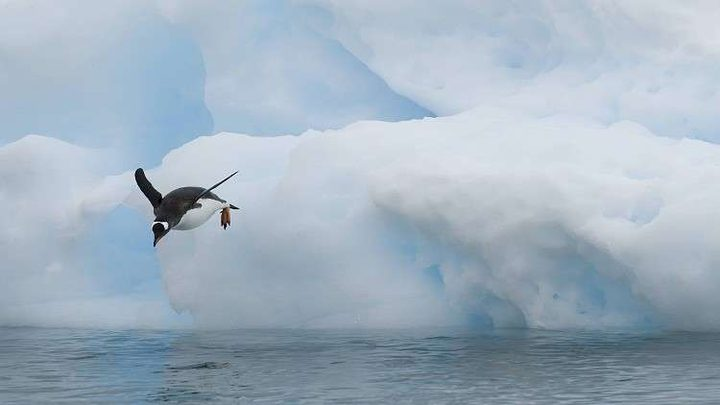 علماء روس يبحثون عن الحياة في القطب الجنوبي