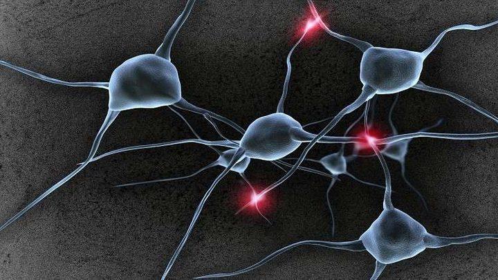 علماء يرصدون تشكل خلايا الدماغ