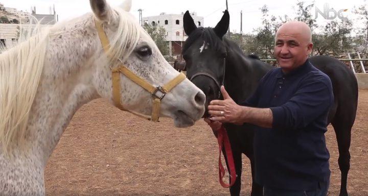 تربية الخيول العربية الأصيلة (فيديو)