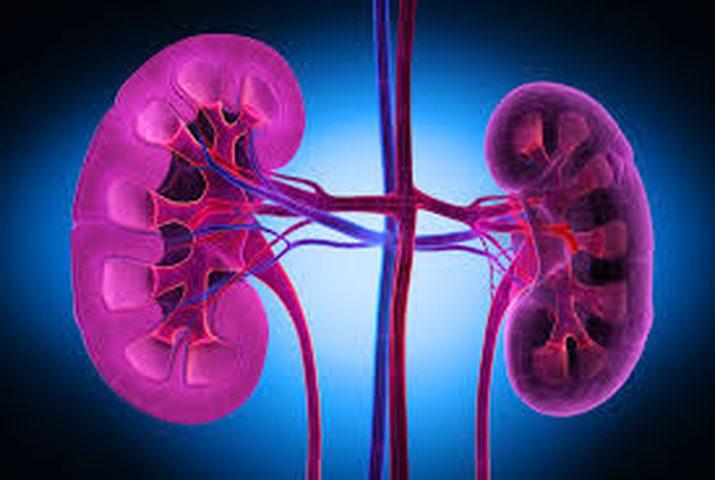 انجاز طبي  قد يضع حدا لأمراض الكلى