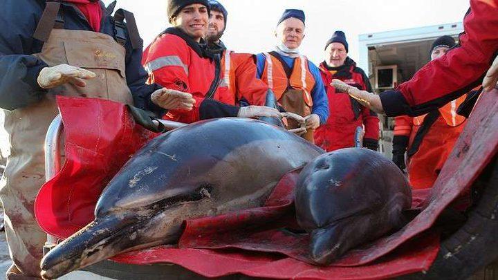 """انتحار جماعي لـ""""الدلافين""""!"""
